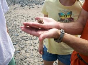 NB7 hermit crab