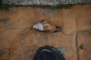 typhoon snail breakfast