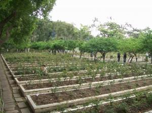 gardens 16