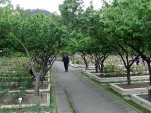 gardens 17