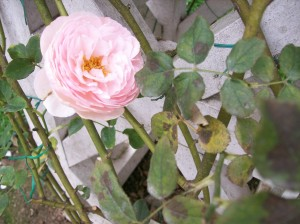 gardens 18