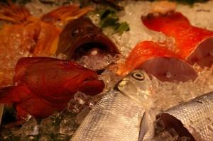 ShiDong 16 fish heads