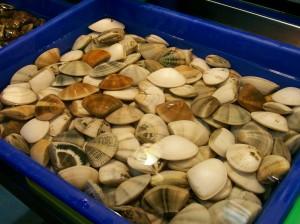 ShiDong 28 fresh clams