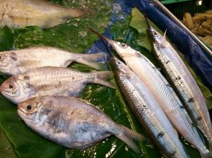 ShiDong 28 needle nose fish