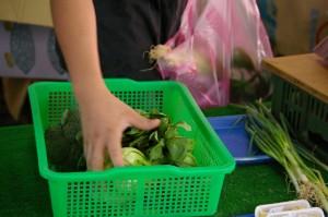 ShiDong 4 veg basket