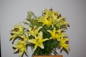Post-op lilies