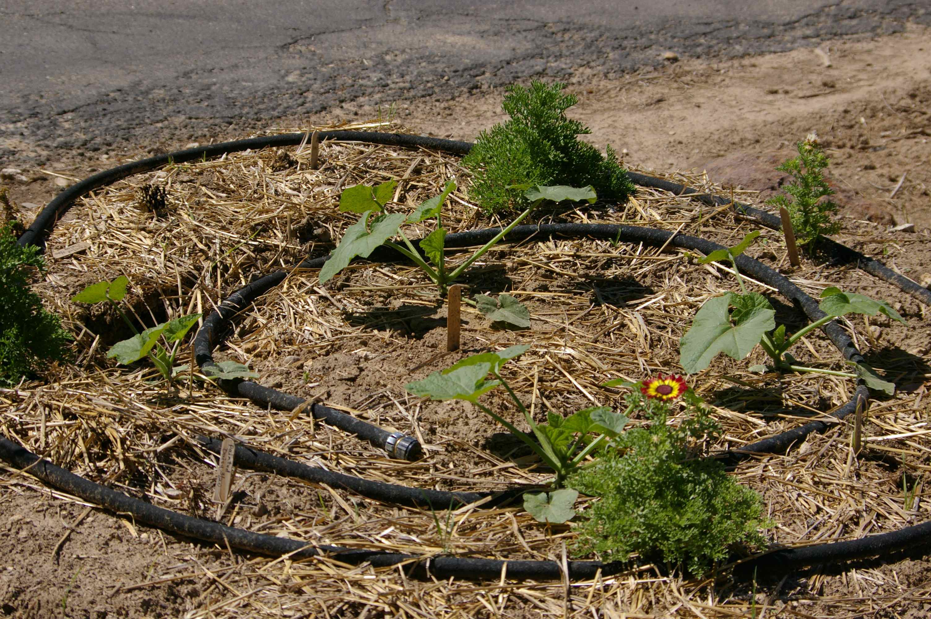 Straw Bale Garden Complications and Problem Solving