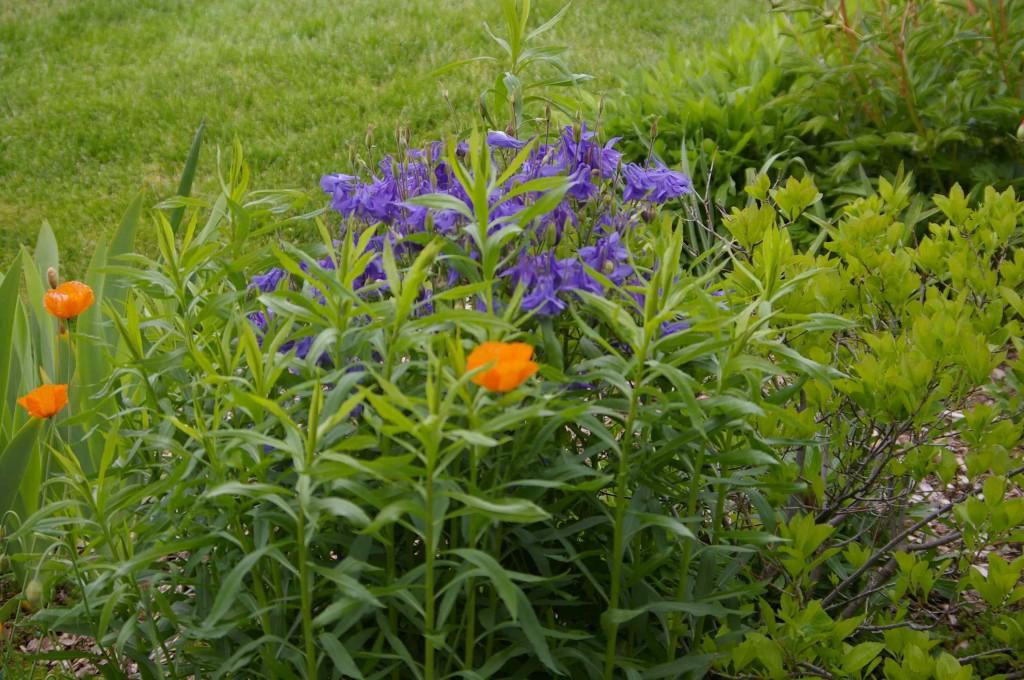 May Blooms at the Idaho Botanical Garden