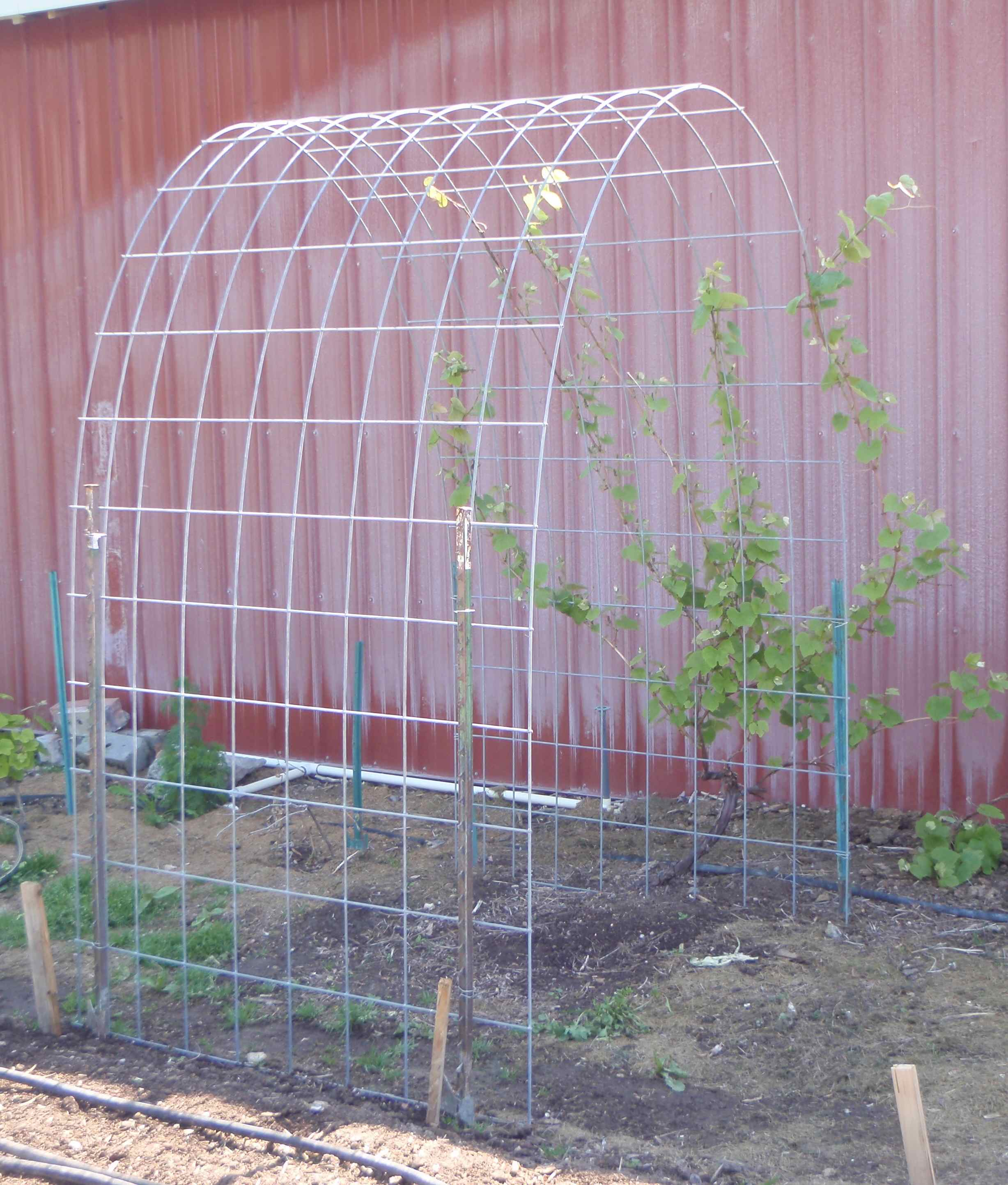 Home Garden Grape Trellis