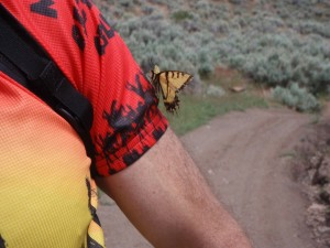 yellow swallowtail butterfly thinks Greg is a flower