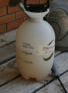 use insecticidal soap concentrate diluted in a gallon spray applicator