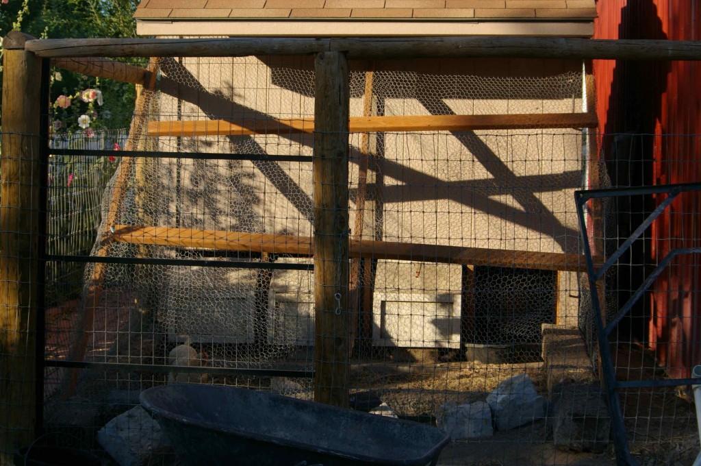 Chickens in Maximum Security Lock Down