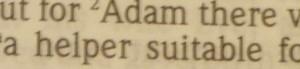 Adam suitable helper