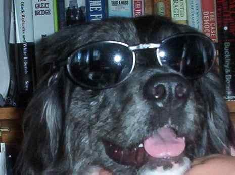 Kiwi in sunglasses