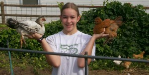 well socialized chickens being held by young girl