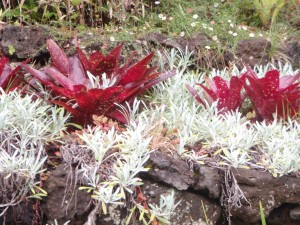bromeliads in contrast