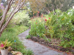 Canna lilies on the side of the path