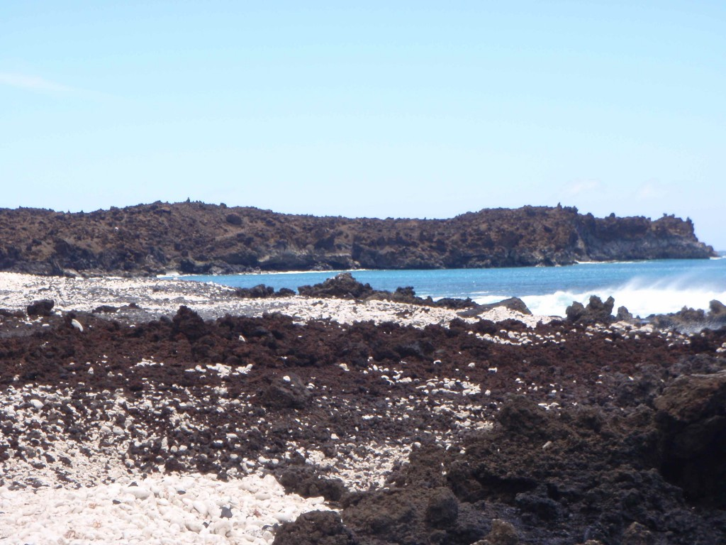 Helpless Female Visits La Perouse Bay in Maui with Wild Greg