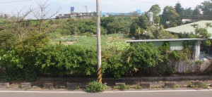 One of the rare open spaces in a residential area has a typical looking vegetable garden.
