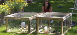 me with my chicks in the portable pens spring of 2009