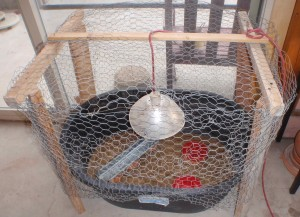 a wire cover keeps the chicks safe and the house chicken free