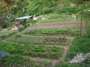a closer look at their garden crops