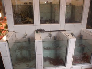 lobster tanks