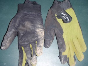 a pair of garden gloves that I had been wearing recently on my bike rides