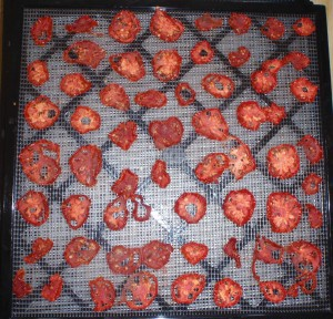 A dehydrator tray of dry tomatoes