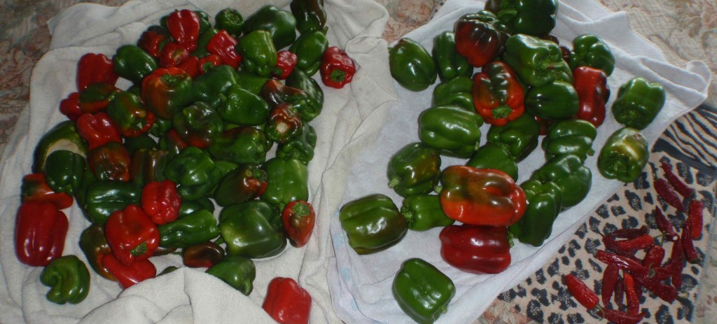 Freeze Hot Peppers and Bell Peppers for Easy Winter Eating