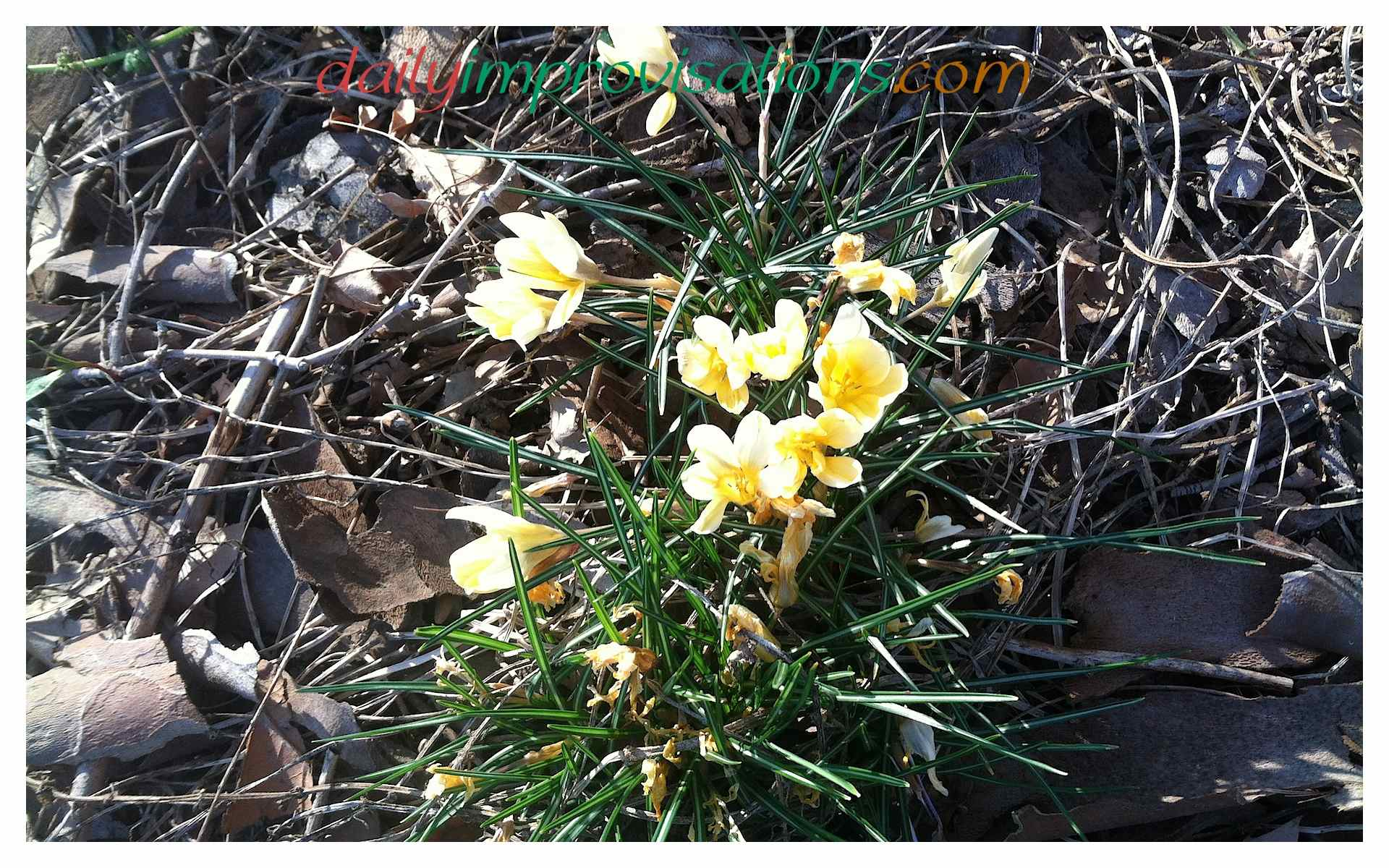 What To Plant In March In The Southwest Idaho Garden