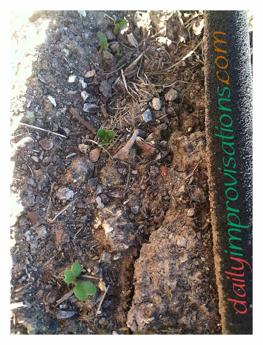 What plants will i grow in my april vegetable garden in - Vegetable garden what to plant in april ...