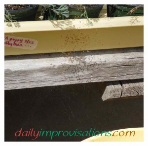 Newly hatched baby spiders making it unappealing to pick up my seedling trays.