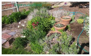"""I just """"felt the need"""" for pots in this flower bed in the front yard near the driveway. Who can explain these things. Three pots in a row adding their own visual effect."""