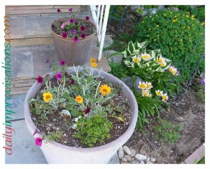 """Even some of my pots on the front porch get some sprinkler spray. I do have to be careful about """"designing"""" such set ups, per all the concerns in the D&B blog post, but overall I find it helps me keep up with watering pots if they are at least getting some sprinkler action."""