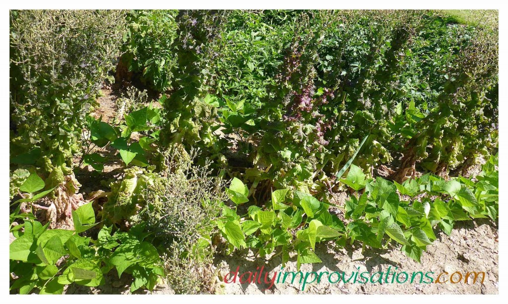 10 Ideas for Vegetable Gardening in Small Spaces