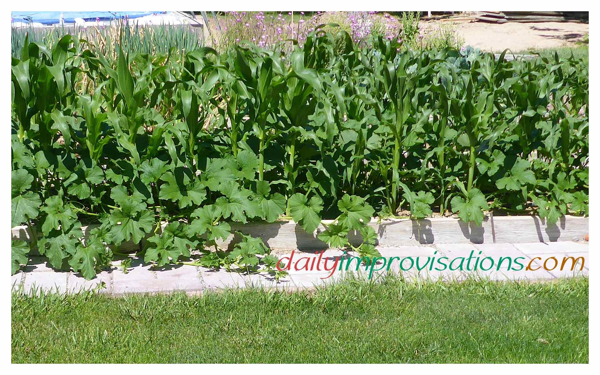 10 ideas for vegetable gardening in small spaces - Vegetable gardening in small spaces image ...
