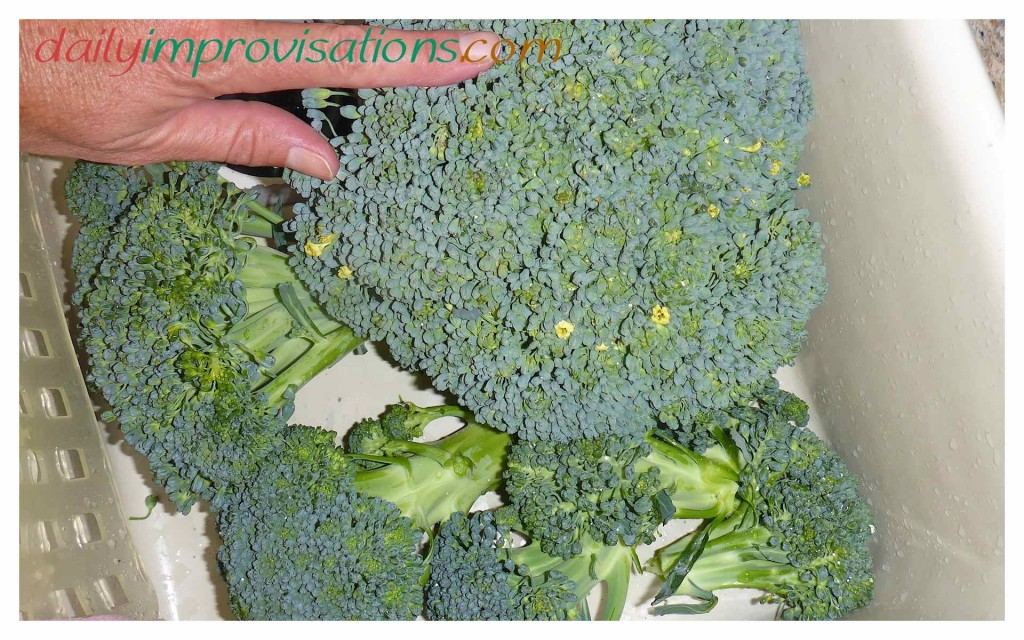 Finally, An Open Pollinated Broccoli with Big Heads
