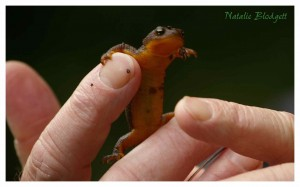 We learned we should not use the newts for survival food, as their skin is poisonous.