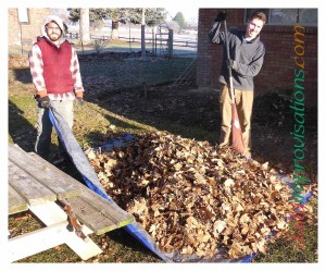 Leaf clean up made easier with a tarp flat on the ground, onto which leaves can be raked. Unfortunately, I did not get a photo of the use of the tarp the day before with the heavy debris being taken to the trailer.