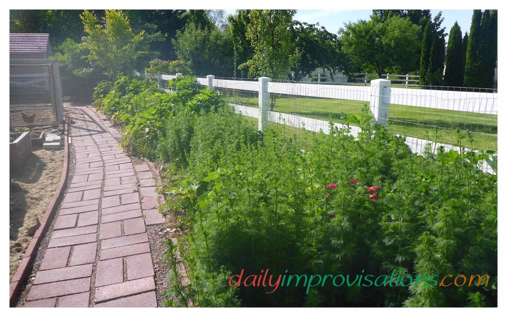 22 Tips for Weeding in Real Life Gardens