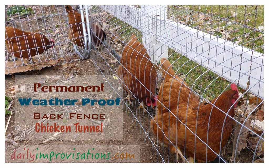 A Permanent Weather Proof Back Fence Chicken Tunnel