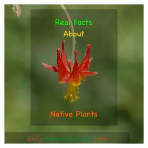 How to you decide what is a native plant?