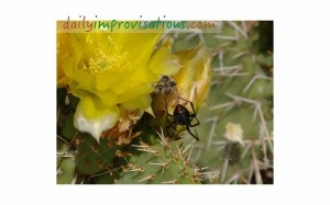 How to you define good insects? Here is a black widow dining on a bee. (I did take this photo myself!)