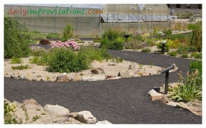 "If there is a ""Botanical Garden"" open to the public in your area, it can be a good place to get ideas for how to manage plants in your specific environment. This photo is of a desert-like planting at the Idaho Botanical Gardens in June."