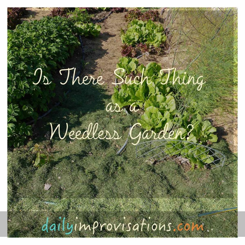 Is There Such a Thing as a Weedless Garden