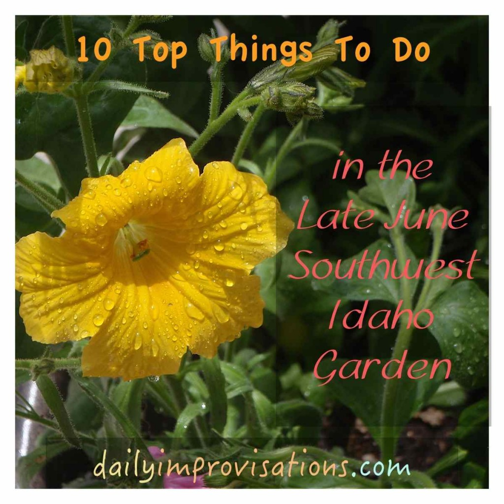 10 Top Things To Do in the Late June Southwest Idaho Garden