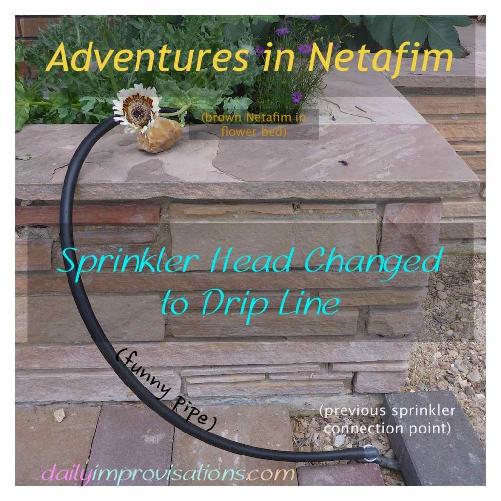 Adventures in Netafim – Sprinkler Head Changed to Drip Line