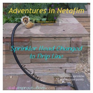 sprinkler head changed to Netafim drip line