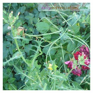 Weeds have a way of being camouflaged when everything around is growing well, but you don't want them to go to seed!